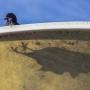 Yaltabird